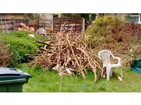 Pile of log wood and branches for all size ready to collect