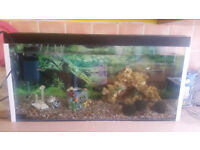 Cold Water Fish x8 and Fish tank for sale (included accesories)