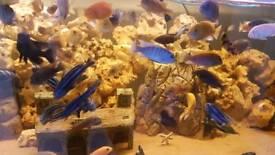 Massive 8ft Fish tank