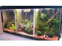 fish tank, breading tank, Siamese fighting fish tank