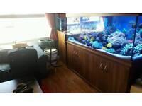 Clearseal 6x2x2 fish tank