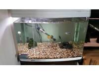 FULL SETUP INCLUDING FISH & EXTRAS
