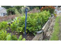 It's hedging time! Laurel plants for sale
