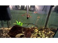 Small Selection of Tropical Fish for Sale