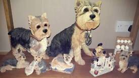 Yorkie collection