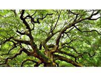 Tree surgery/Arborist Services