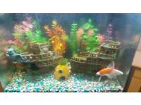 Fish tank with two gold fish