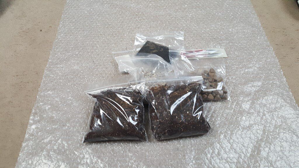 Bonsai starter pack