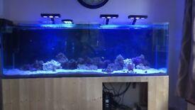 Reef tank 6ft full equipment set up