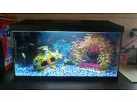 Aqual 2.5ft fish tank no stand