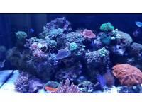 Whole Marine Tank Fish & Corals