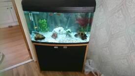 Aqua one 850 165ltr full setup for sale