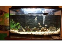 Aqua Szut Aquarium fish tank