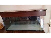 Fishtank and everything you need for sale