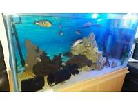 400 litre fish tank
