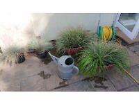 Various Ornamental Grass, Aquatic Plants etc.