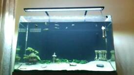 130l tropical fish tank and equipment