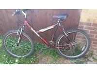 """Ladies Bicycle 20.5"""" Frame"""