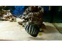 Marine fish and live rocks and corals