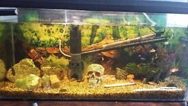 3ft fish tank full tropical set up