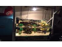 60lt terrapin tank full set up