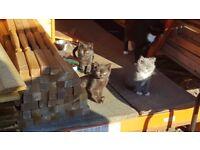 Kittens needing a good home :)