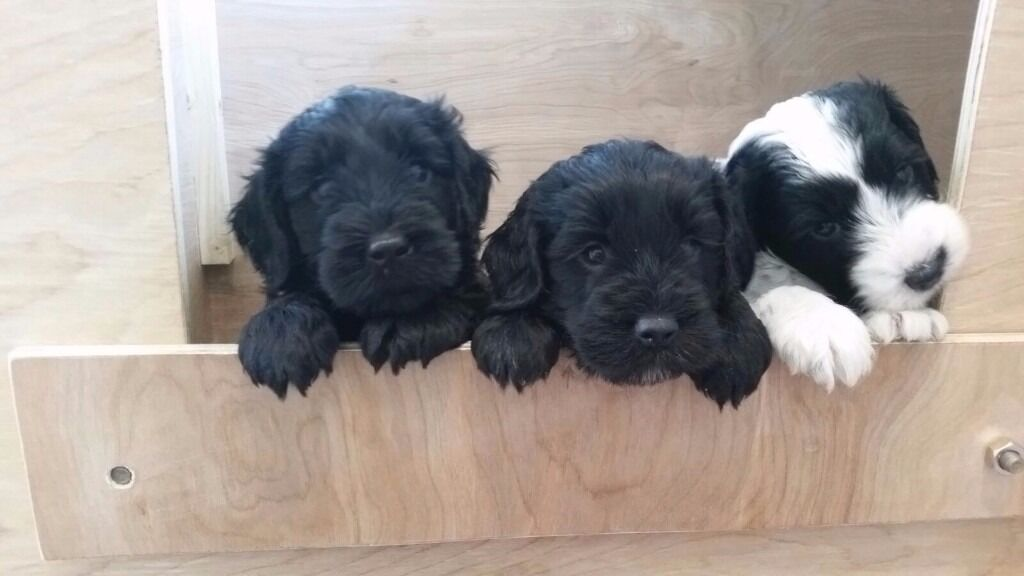 Dogs Homes Near Swindon