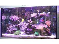 Fully Established Marine Aquarium (Aqua one)