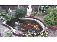 Garden pond fish for sale
