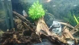 Bog Wood drift wood for fish tank