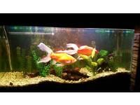 Aquarium complete kit plus fish