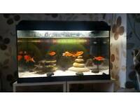 Fish tank setup with 7 gold fish