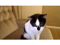 Nice black & white kitten