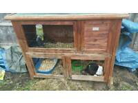 2 male dutch rabbits and double tier hutch
