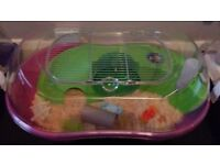 Rorboswski hamster with new cage