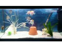 Fluval roma 200ltr complete with fish