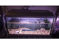 150 Litre Tropical Fish Tank