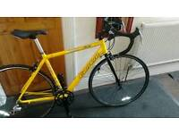 Carrera TDF Road Pro, Roadbike, 14 Gear bike, £120ono Immaculate