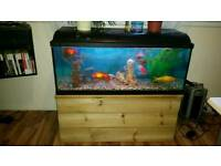 150 L Fish tank with all accessories and fish