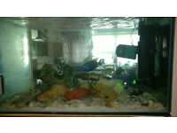 Complete fish tank with all accessories & Fish