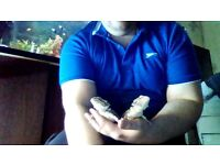 bearded dragons 5ft vivarium everything they need free to good home