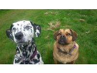 Doggy Day Care, Dog Walker, Dog Walking, Dog Boarding around Chiswick, Acton, Shep. Bush and more!!!