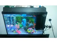 2ft by 1 ft tropical fish set up