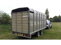 !4ft Ifor Williams Stock Trailer