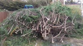 Free wood for wood chippings or composting