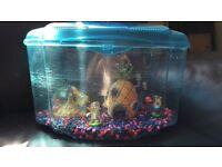 Sponge bob fish tank