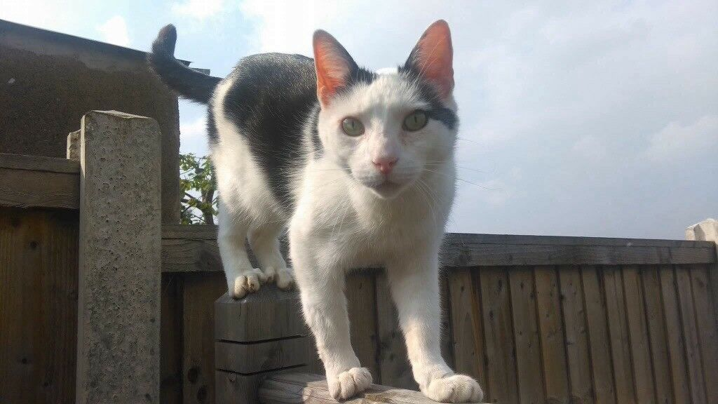 Missing male cat from Lofthouse area