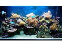 4ft marine aquarium for sale