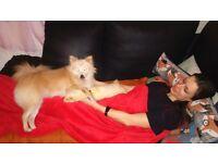 DOG SITTER/DOG BOARDING /DOG SITTING/DOG GROOMER/DOG GROOMING