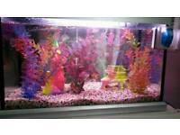 Rainbow fish tank full set up